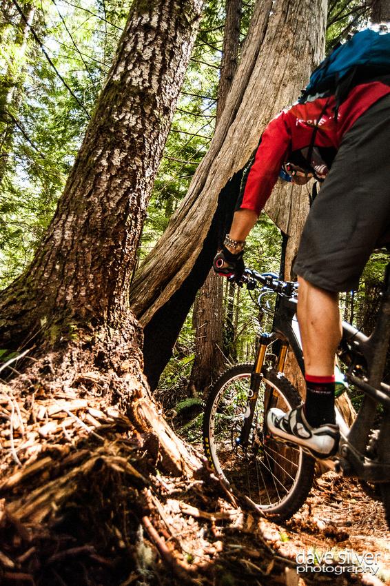 Riding through the stump