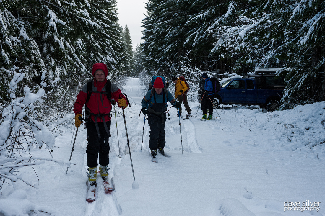 Ski tour on the logging road